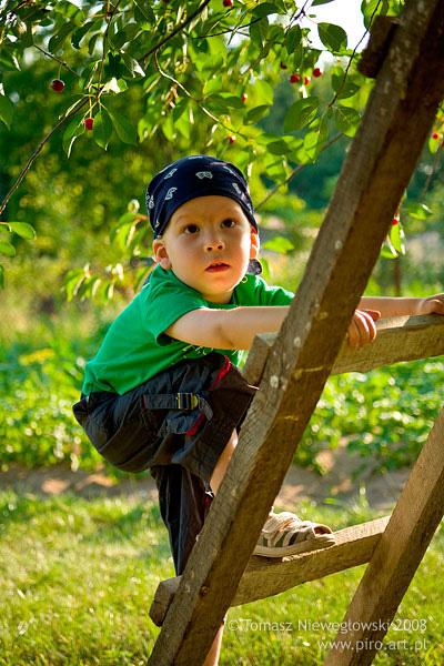 Chłopiec na drabinie w sadzie
