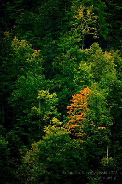 Pejzaż, Pieniny, jesienne drzewa