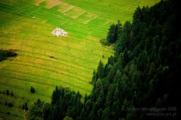 Pejzaż, Pieniny, owce