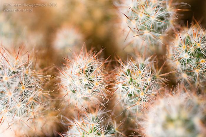 Canon 100mm macro - kaktus