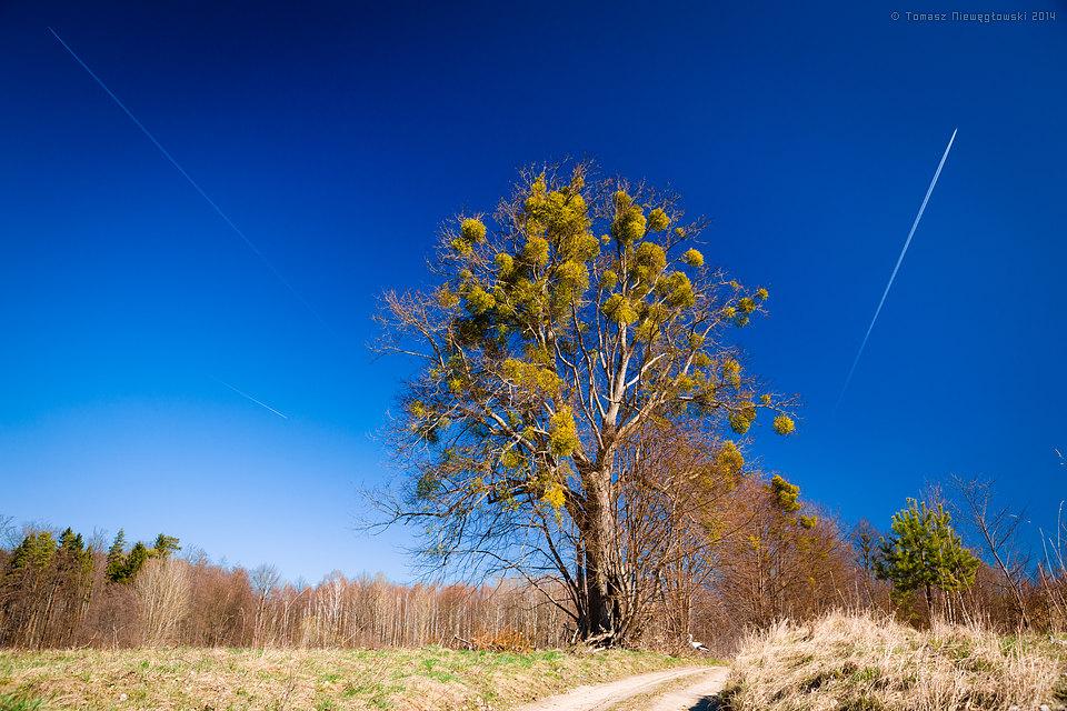 Droga, drzewo z jemiołą, bocian i samoloty