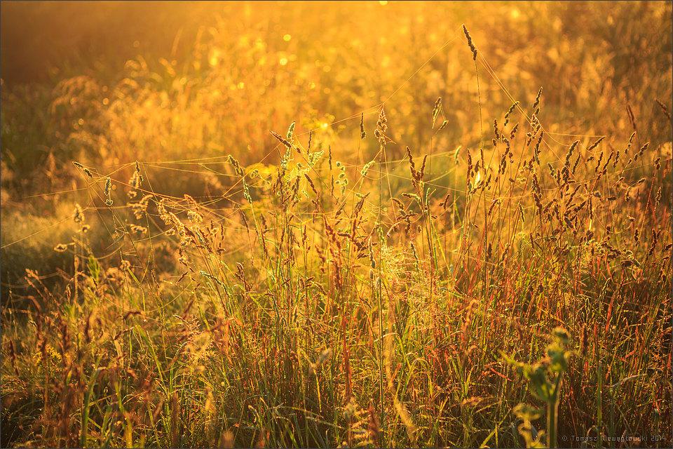 Łąka i rosa o wschodzie słońca
